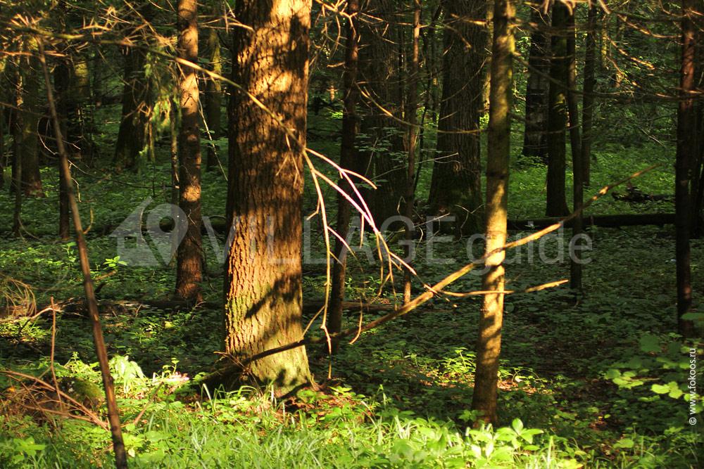 33 км от мкад по дмитровскому шоссе карта: